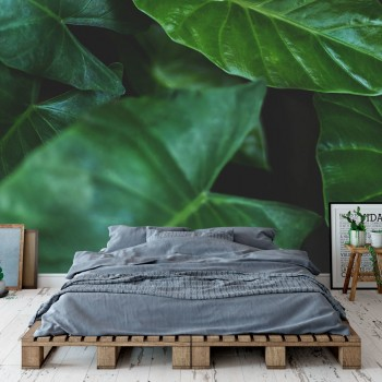 Daring Walls Behang Tropical leaves - 4