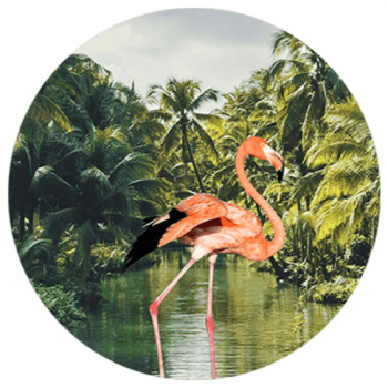 Muurcirkel FBRK. Flamingo in de jungle